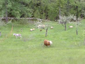 Photo: animali al pascolo