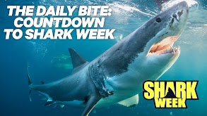 The Daily Bite: Countdown to Shark Week thumbnail