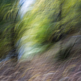Forest by Rajarshi Chowdhury - Abstract Fine Art ( dynamic, shake, art, fine art, trees, forest, motion, photography )