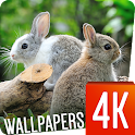 Sweet Animals Wallpapers 4k icon