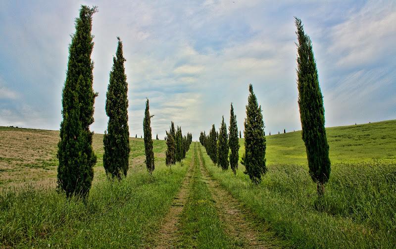 Sentiero tra i cipressi di Gianluca Presto
