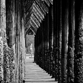 Pathways  by Todd Reynolds - Black & White Abstract