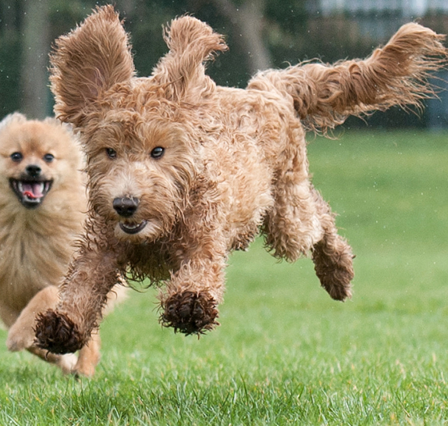 yahoo by Michael  M Sweeney - Animals - Dogs Running ( joy, puppy, michael m sweeney, run, dog )