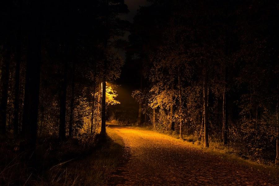 Fall is coming by Juliusz Wilczynski - City,  Street & Park  Street Scenes ( sweden, umeå,  )