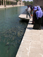 Photo: Pilgrims feeding the holy carp, Urfa