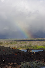 Photo: Rainbow over Sea Lions