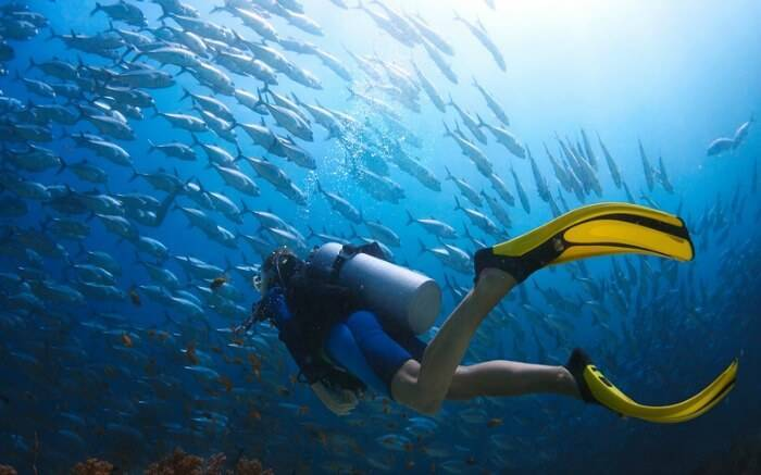diving_image