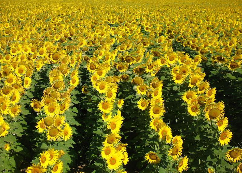 Pensando a van Gogh di AlessandraPaci