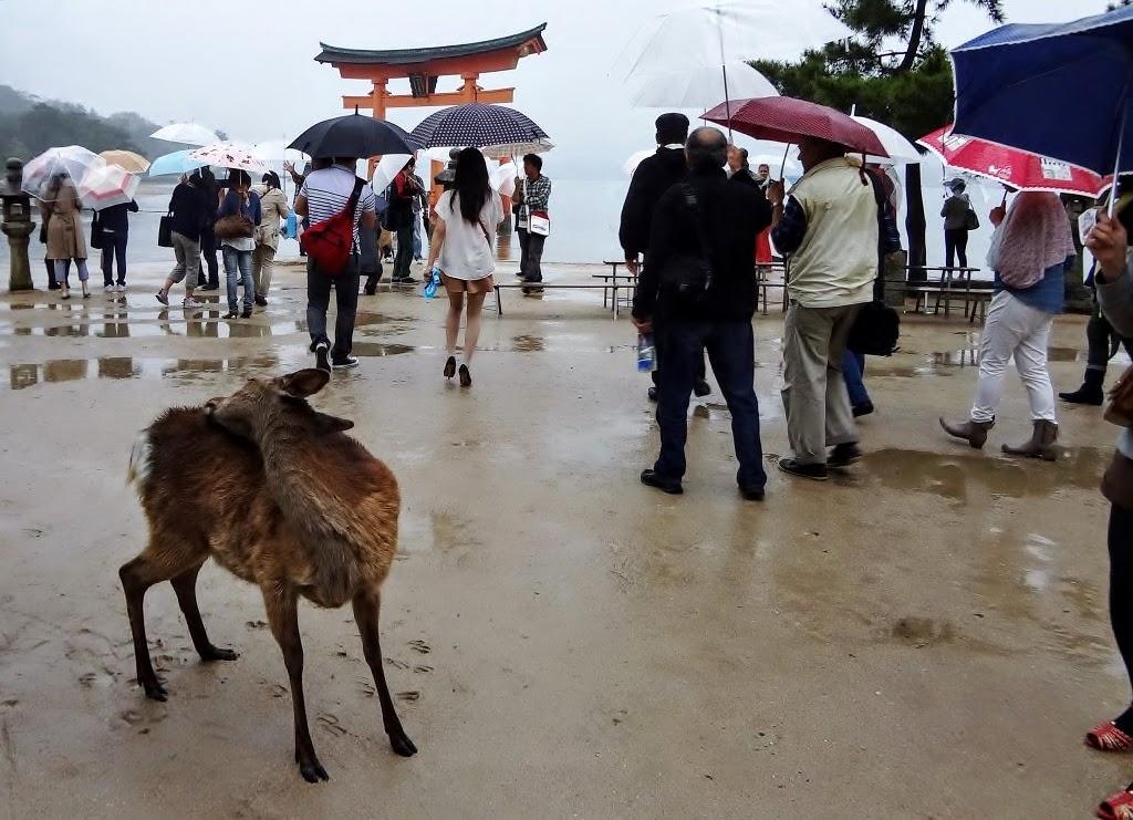 Chuyến đi gặp Chúa ~ Hiroshima và Okayama 4