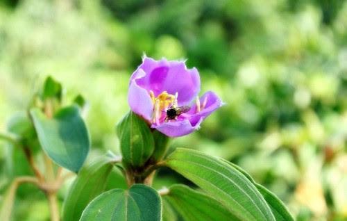 Vườn quốc gia Bạch Mã đẹp tựa tranh 5