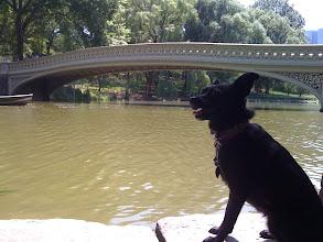 Photo: Malia in Central Park, New York, NY