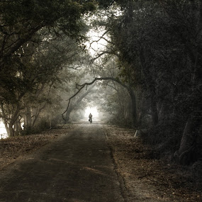 Bharatpur, India by Dipankar Bose - Landscapes Forests