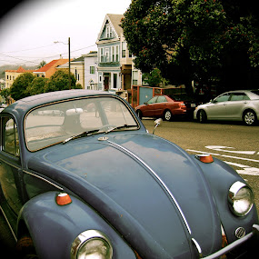 Bugs of san francisco by Abi Gilson - Transportation Automobiles ( car, old, vintage, california, street, bug, cute, san francisco )