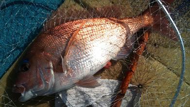 Photo: 今日一番のサイズかな? 3kgぐらいの真鯛です!