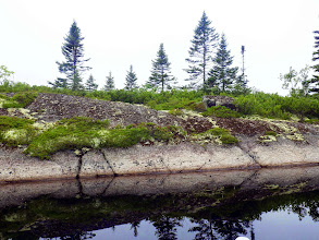 Photo: The low bushy groundcover is mostly Broom Crowberry, with foliose Reindeer Lichen mixed in; some Lowbush Blueberry.The lower 30 cm or so just above the waterline is scraped clean by ice scour. Brown staining at and below the waterline is probably attributable to tannins in this brown water and microbial growth.