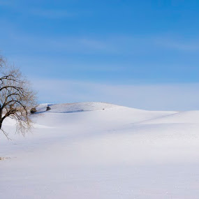 Shades of White by Marie Browning - Landscapes Prairies, Meadows & Fields ( pano, tree, snow,  )