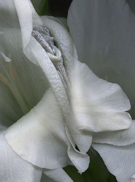 foto-polovih-gub-klitora-vlagalisha-seks-aziatka-porno-mobilniy-seks