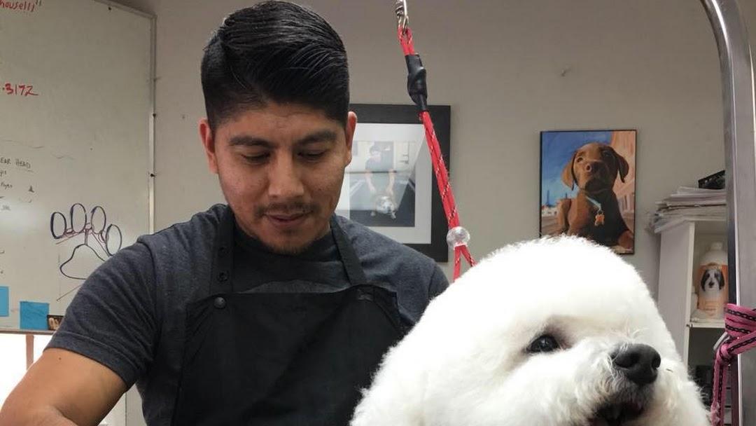 Houston Pet Grooming Academy Certified Pet Groomer In Houston