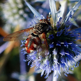 Fly over the blue by Atti Maguran - Nature Up Close Flowers - 2011-2013