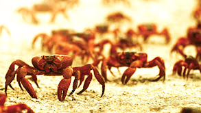 Night of the Christmas Crab thumbnail