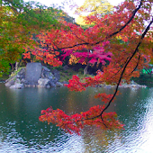 Japan: Kourakuen_Autumn leaves