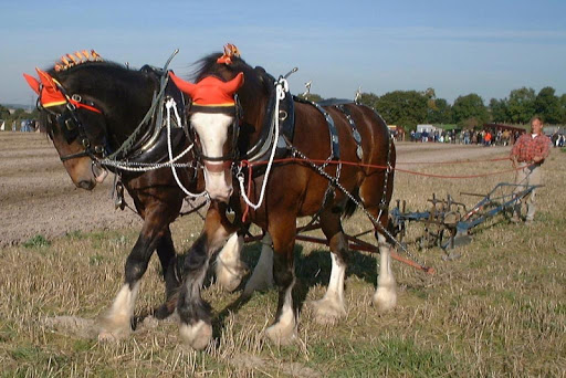 Clydesdale horse Wallpapers