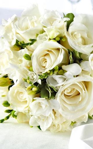 Unduh 800 Wallpaper Foto Bunga Mawar Putih  Paling Keren