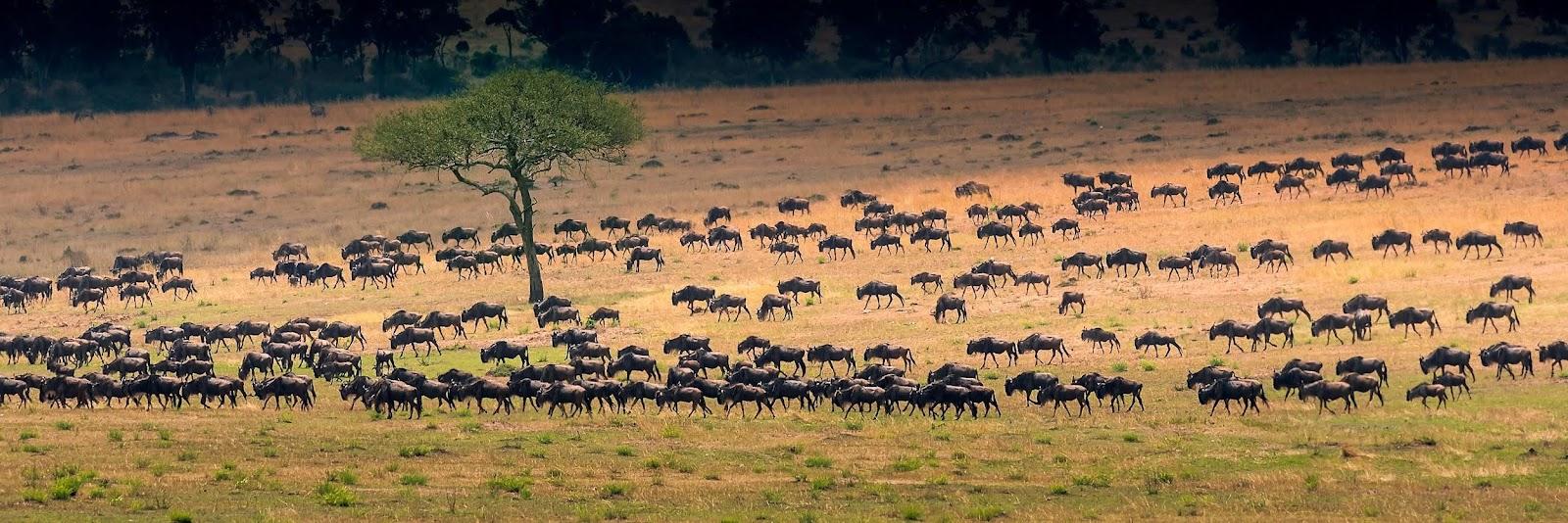 animals in safari