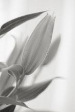 Photo: goodnight #flowersphotography +Monochrome Arty Club+Breakfast Art Club #blackandwhitephotography