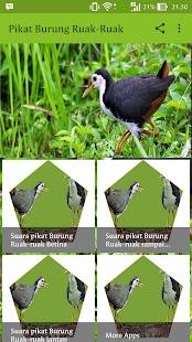 Suara Pikatan Burung Ruak-Ruak - náhled