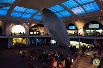 Photo: American Museum of Natural History