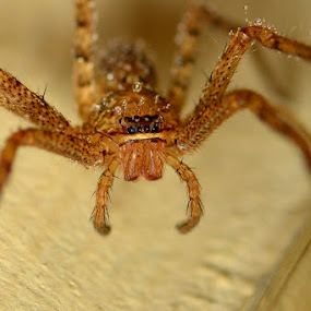 Tounge Out by Stevie Go - Animals Insects & Spiders ( macro, tounge, wet, insects, eyes )