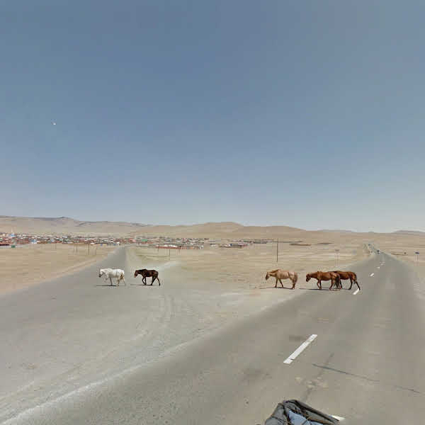 Zuun Mod | Mongolia