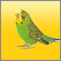 Budgies Song icon
