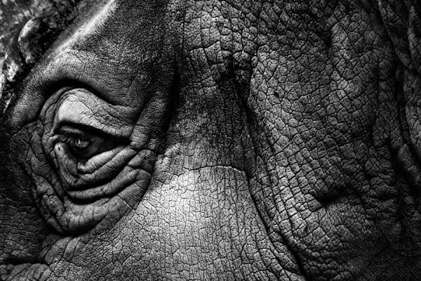 Rhino di robi7857
