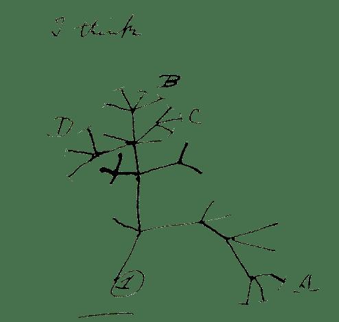 darwinsdaytree.png