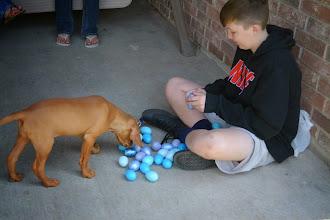 Photo: Akela helping Astchyn count his eggs