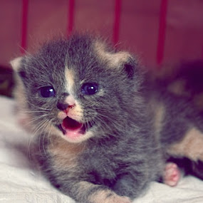 by ADe ANkas - Animals - Cats Kittens (  )