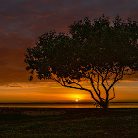 Sunrise by Dom Del - Landscapes Sunsets & Sunrises ( water, clouds, tree, yellow, sunrise )