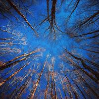 Trees di