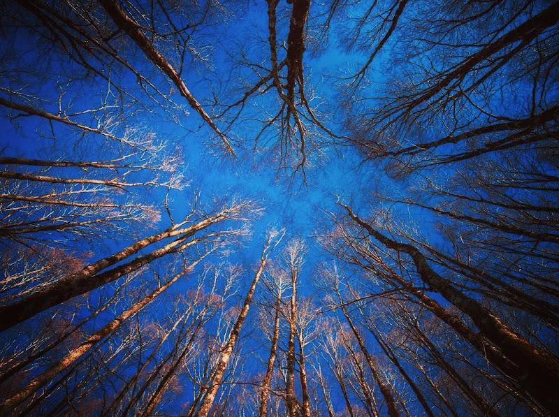 Trees di utente cancellato