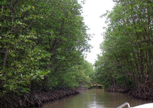 Reserva da Biosfera Manguezal de Can Gio