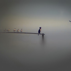 cormorants and friends by Fereshteh Molavi - Animals Birds ( birds )