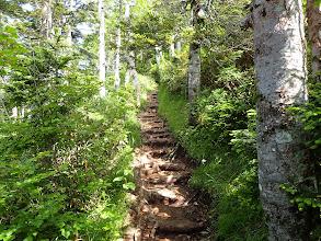 樹林の登りとなる
