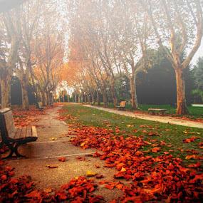 *** by Yasin Akbaş - City,  Street & Park  City Parks