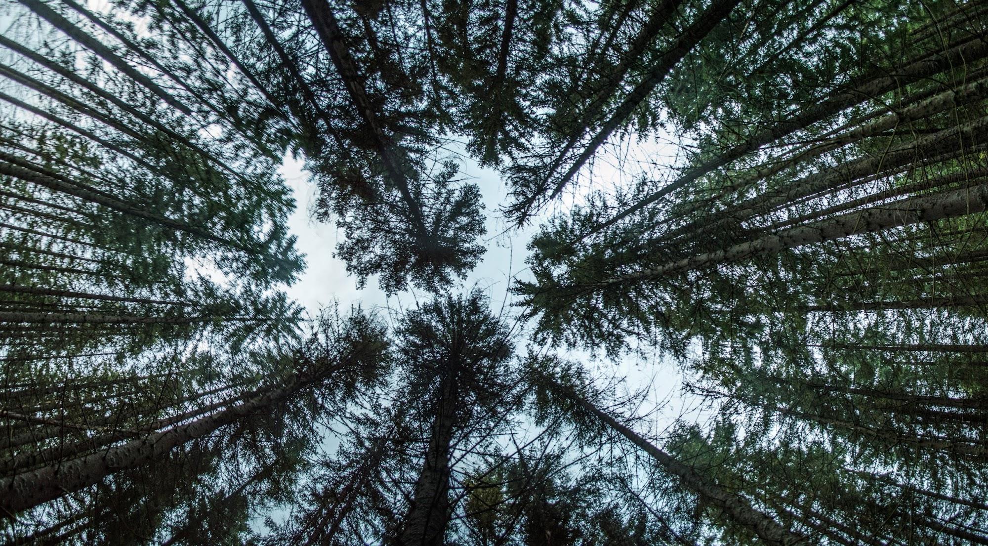 Дерева в долині річки Мшана