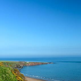 St Cyrus Beach  by Louise Corr - Landscapes Beaches ( beach water sea north sea cliff coast )