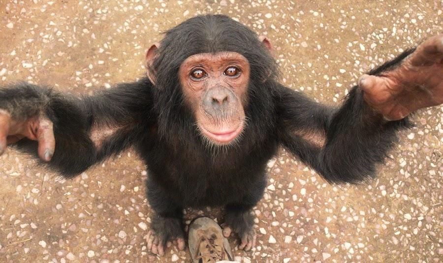 Needs a lift by Ranger Jenni - Animals Other Mammals