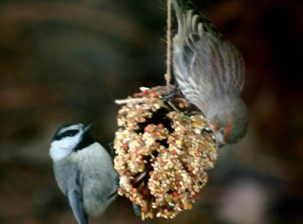 Pine Cone Bird Feeder Recipe