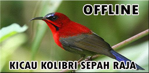 Masteran Burung Kolibri Sepah Raja אפליקציות ב Google Play